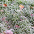 Stock Photo: Frozen lawn