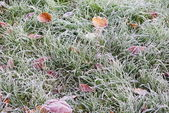 Frozen lawn — Stock Photo