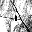 Silhouette of birch tree with bird - Stock Photo