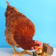Brown hen with golden Easter egg — Stock Photo