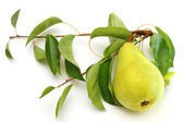 Fresh ripe pear with the branch — Stock Photo