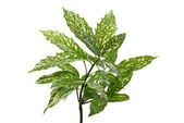 Branch of green leafs — Stock Photo