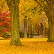 Autumn at the Cathedral - Stock Photo