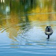 Serene pond scene — Stock Photo