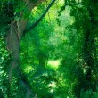 Stock Photo: Enchanted Forest