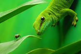 Green gecko lizard — Stock Photo