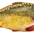 Fresh mirror carp — Stock Photo