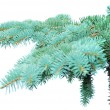 Branches of fir-tree - 图库照片