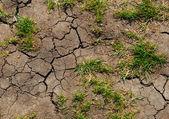 Soil erosion — Stock Photo