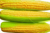 Young corn — Stock Photo