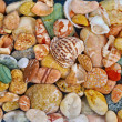 Stock Photo: Beautiful pebble are background