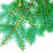 Stock Photo: Branches of fir-tree
