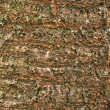 Stock Photo: Cherry texture