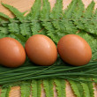 Stock Photo: Chicken egg
