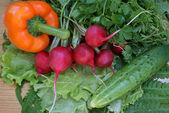 Light vegetables snack — Stock Photo