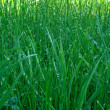 Dew upon green grass — Stock Photo #3285211
