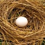 Nest forest bird — Stock Photo