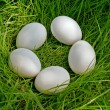 Chicken egg upon green grass — Stok fotoğraf
