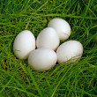 Stock Photo: Chicken egg upon green grass