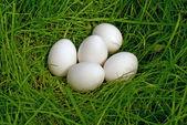 Chicken egg upon green grass — Stock Photo