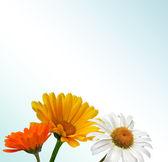 Pole květ — Stock fotografie