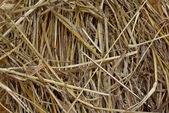 Metal needle in hay — Stock Photo