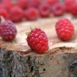 Ripe appetizing raspberry — Stock Photo #3393952