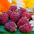 Ripe appetizing raspberry — Stock Photo #3415550