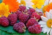 Ripe appetizing raspberry — Stock Photo