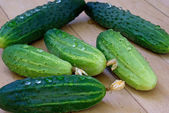 Green young cucumber — Stock Photo