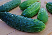 Appetizing green young cucumber — Stock Photo