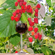 Raspberry wine — Stock Photo #3573248