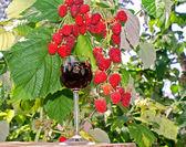 Raspberry wine — Stock Photo