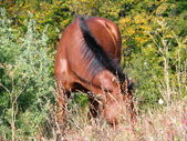 Dark horse. — Stock Photo