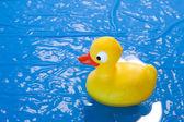 Toy duck — Stock Photo