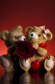 Bears and rose — Stock Photo