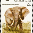 African elephant stamp. — Stock Photo
