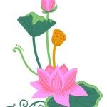 Pink lotus — Stock Photo #2950288