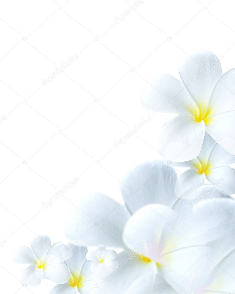 Close-up of delicate white flower blossom with yellow center — Stock Photo #2966795