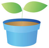 Flowerpots and seeding — Stock Photo