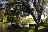 Limpopo River — Stock Photo