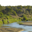 LetabRiver scene, kruger park — Stock Photo #3832171