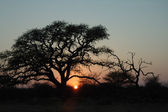 Bushveld sunrise — Stock Photo