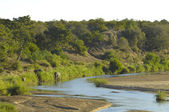 Letaba River scene, kruger park — Stock Photo