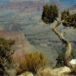 Grand Canyon, Arizona — Stock Photo #3921926