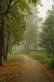 Foggy morning in park — Stock Photo