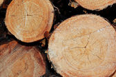 Three pine logs — Stock Photo