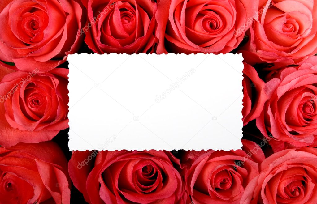 There are many red rose in line, background — Stock Photo #2949795