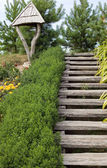 Wooden stairs and nature — Stock Photo