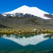 Elbrus is reflected in a mountain lake — Stock Photo